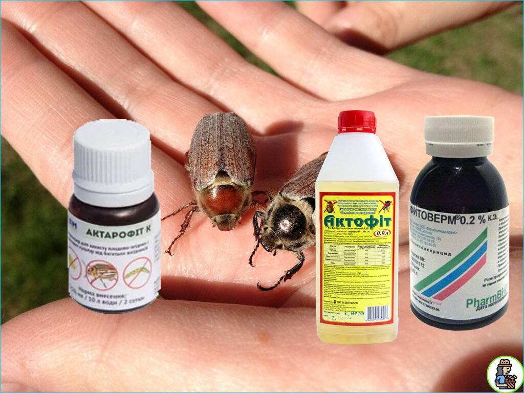 Народные средства от личинок майского хруща