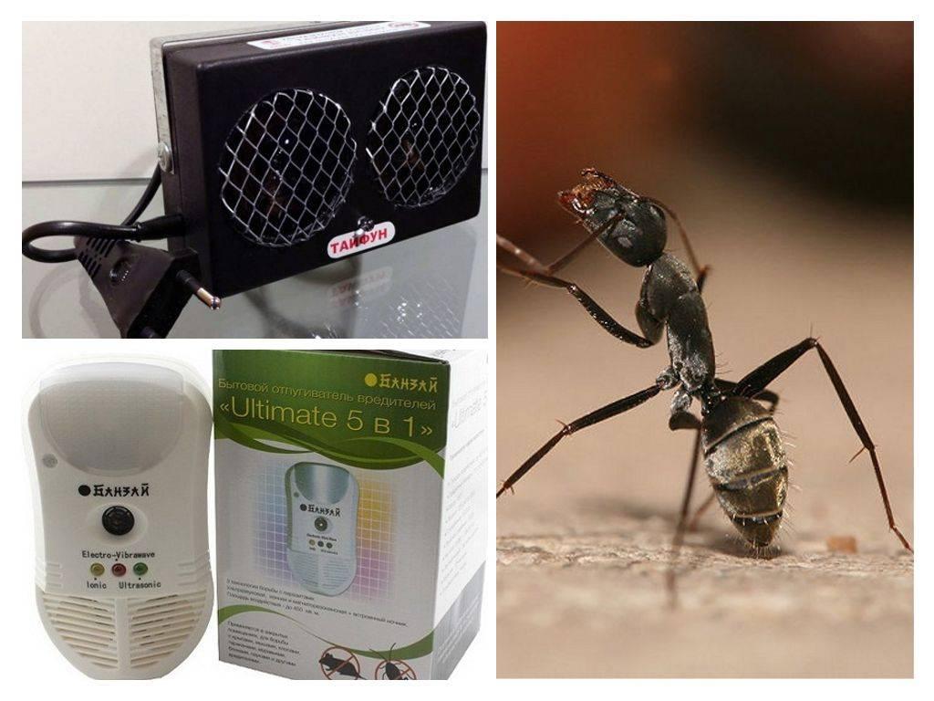 Ультразвуковые отпугиватели домашних муравьев – эффективны?