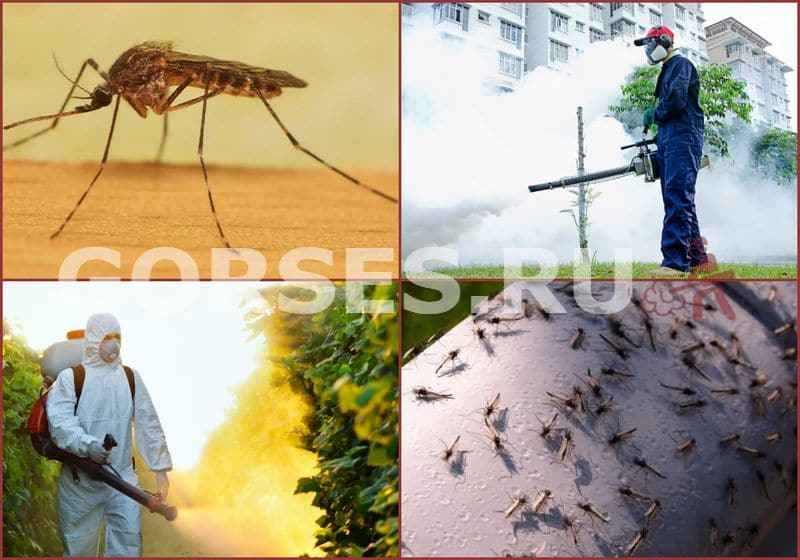 Как избавиться от комаров на даче — средства и способы