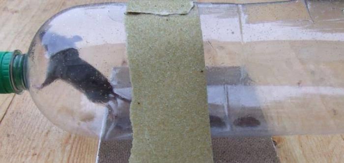 Народные средства от мышей и крыс в сарае