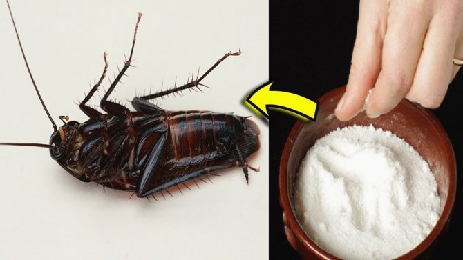 Откуда берутся тараканы в квартире: причины появления, где прячутся, что делать и как от них избавиться