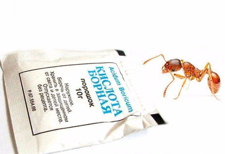 Борная кислота от тараканов - эффективность средства и применение / как избавится от насекомых в квартире