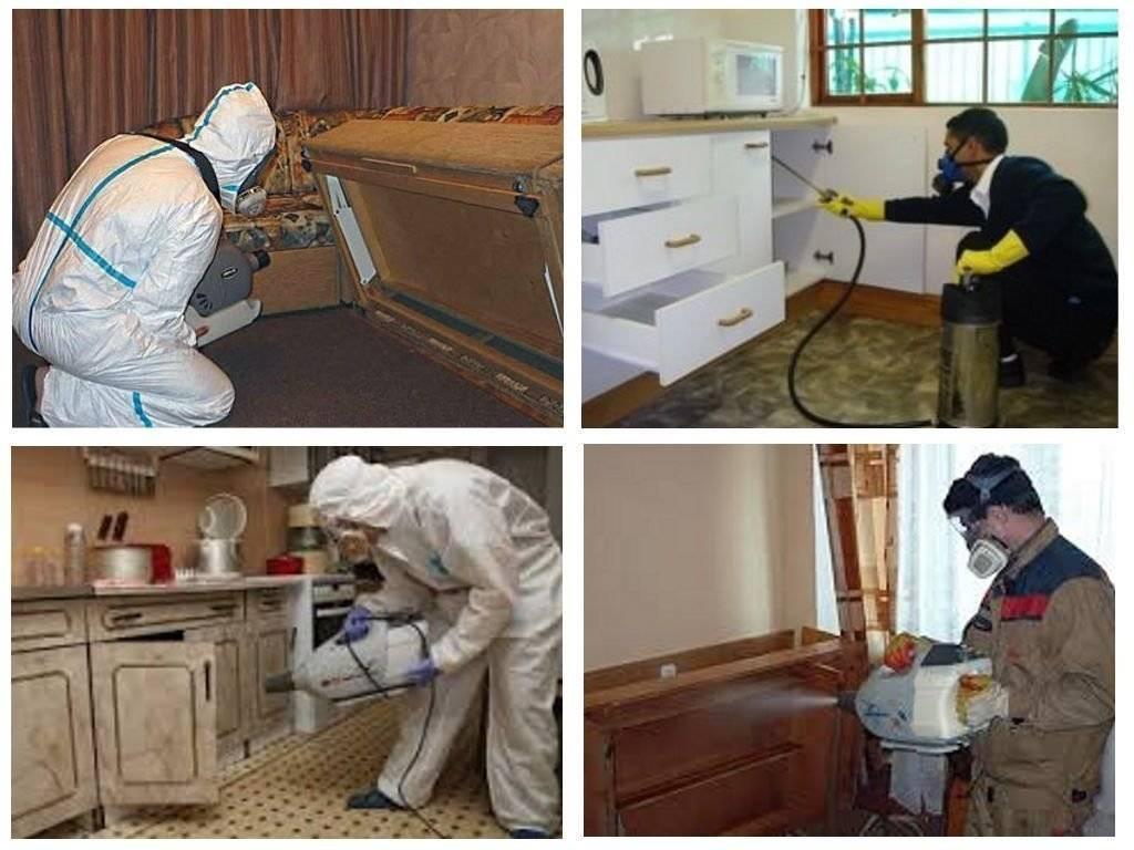 Уничтожение тараканов в москве – обработка квартиры с быстрым результатом