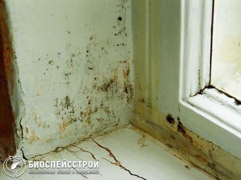 Как убрать плесень со стены в квартире: способы борьбы на разных стадиях заражения
