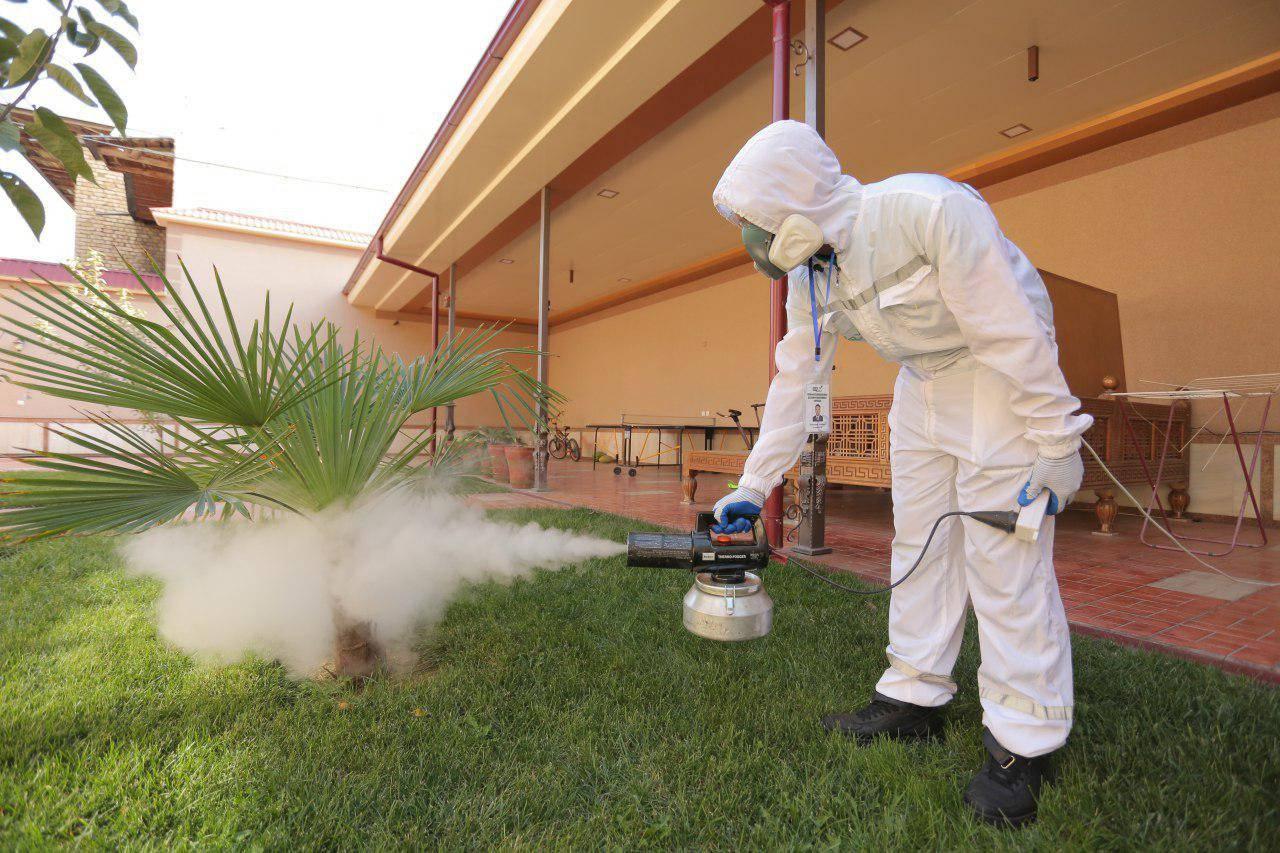 Уничтожение тараканов в спб недорого с гарантией. стоимость дезинфекции от тараканов