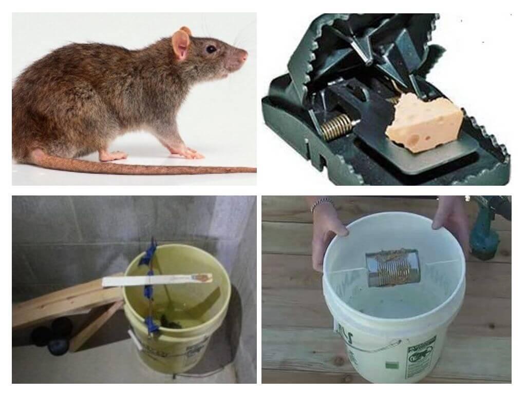 Средства от мышей в частном доме: обзор эффективных средств