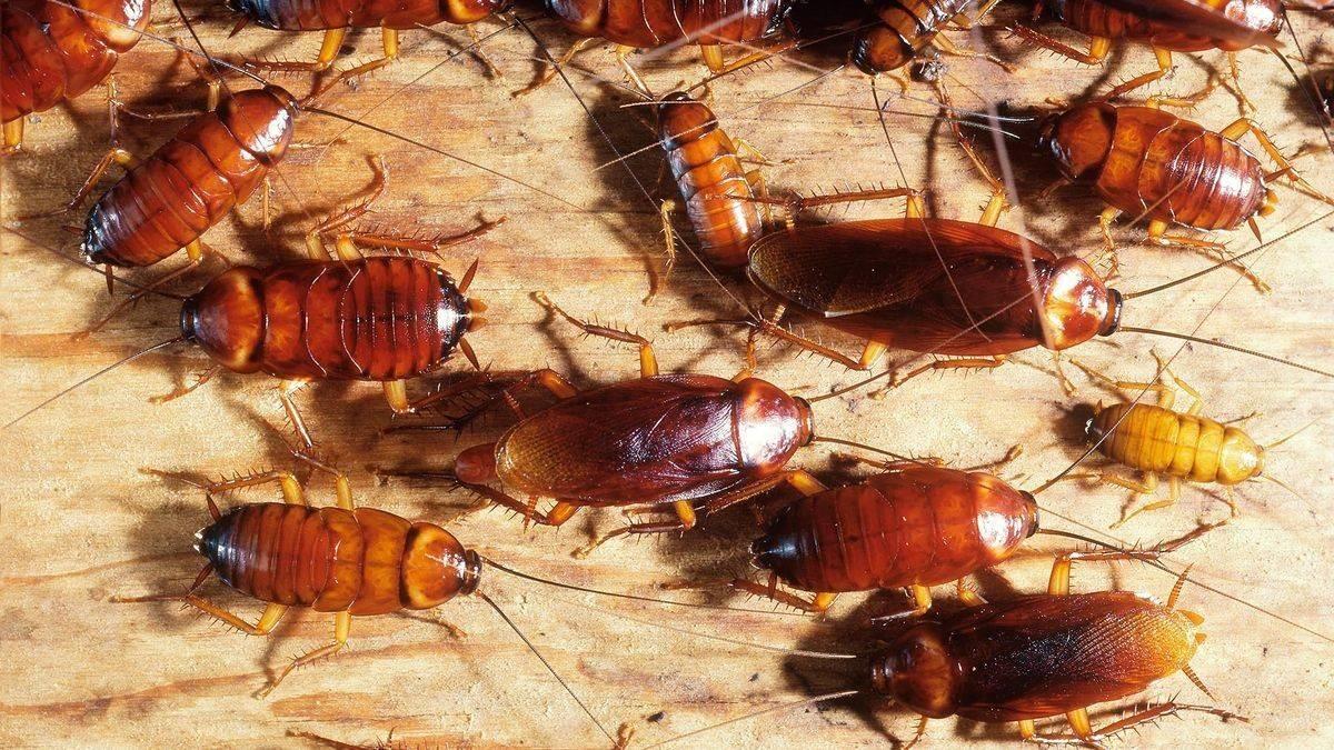 Почему тараканов иногда называют стасиками?