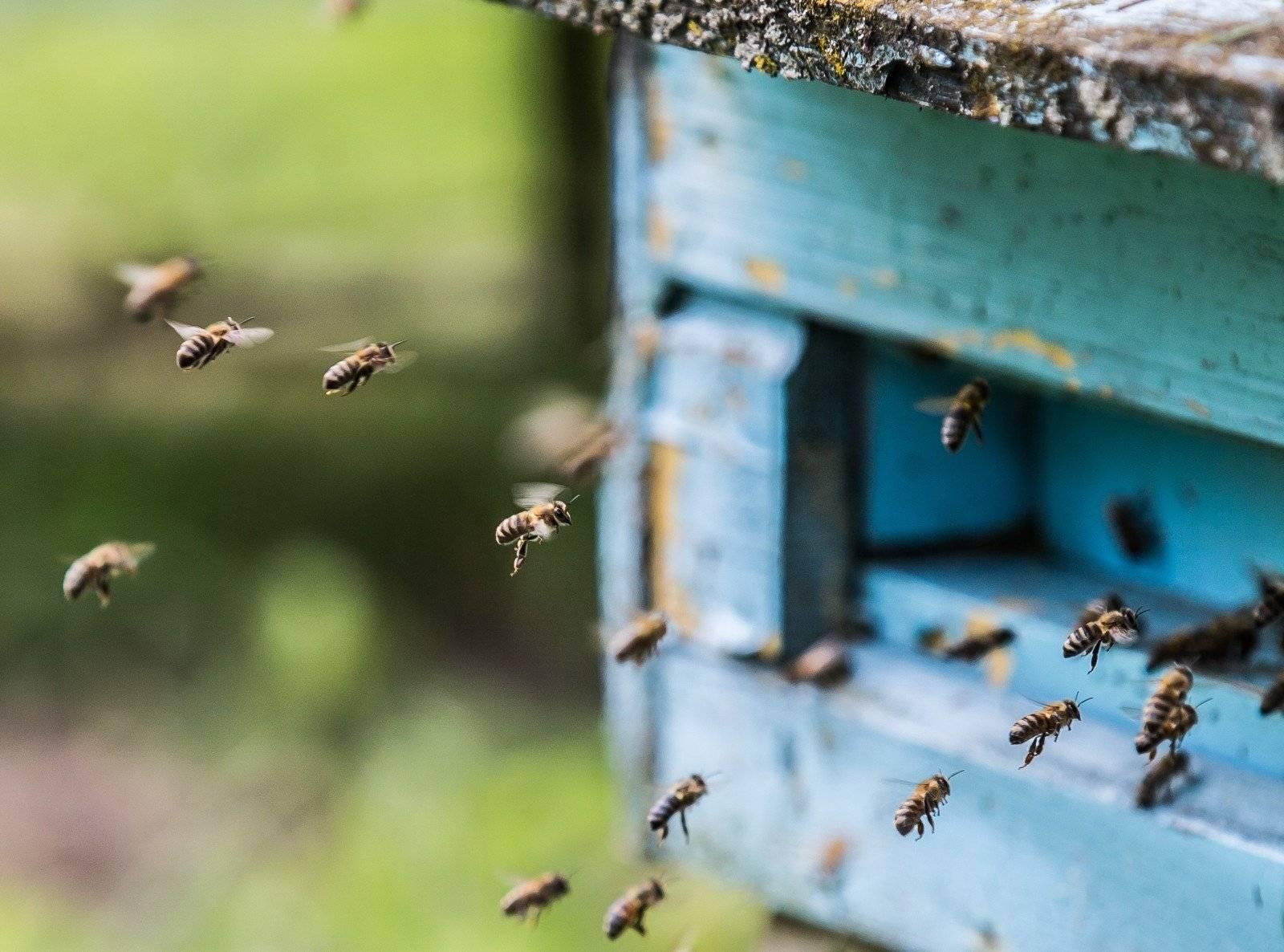 10 вещей, которые пропадут навсегда, если исчезнут пчелы