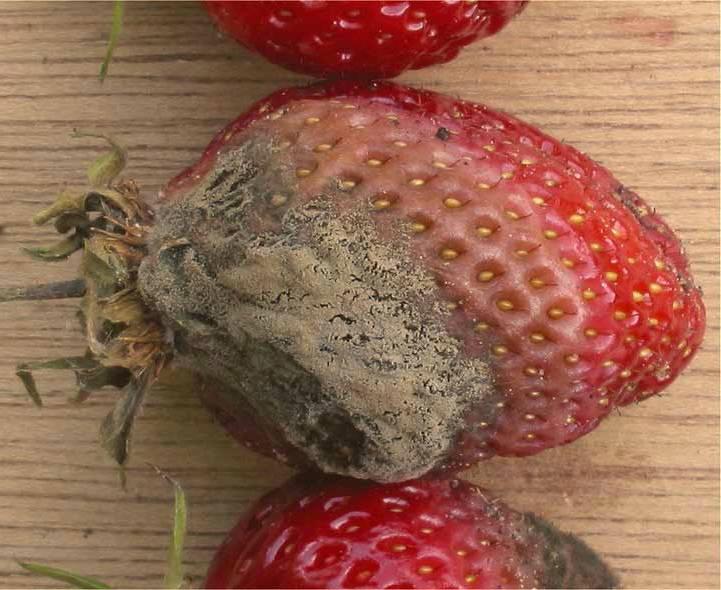 Как навсегда избавиться от малины на участке - про сорта