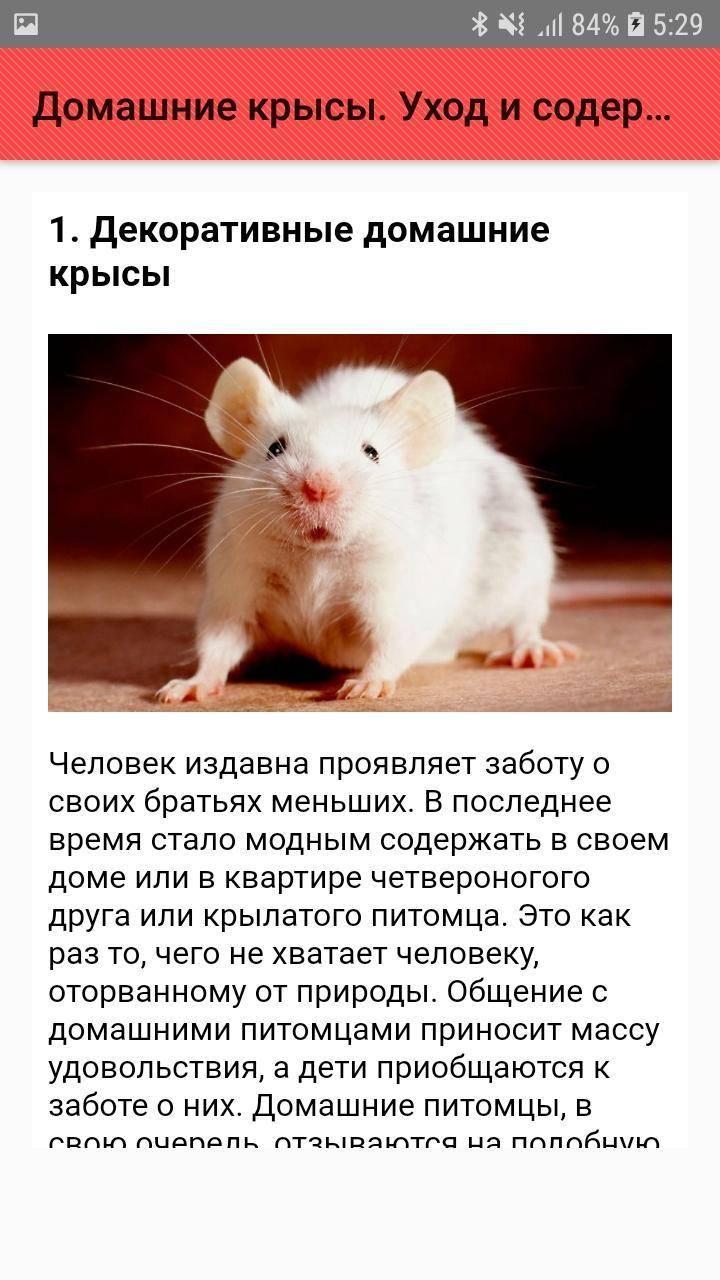 Выбор и обустройство клетки для домашней крысы - люблю хомяков
