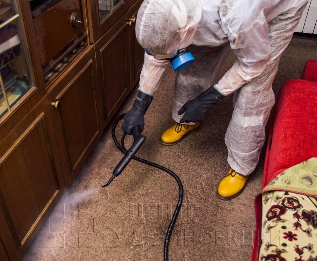 Клопы: как избавиться от постельных, как бороться и проводить уничтожение самостоятельно в домашних условиях, чем травить, какими средствами вывести из квартиры?