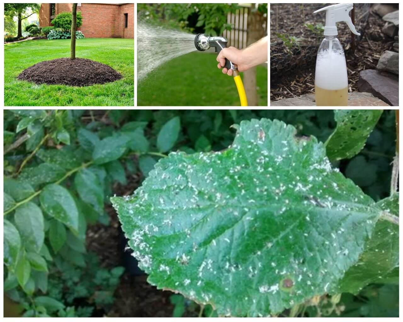 Методы борьбы с тлей в саду и огороде