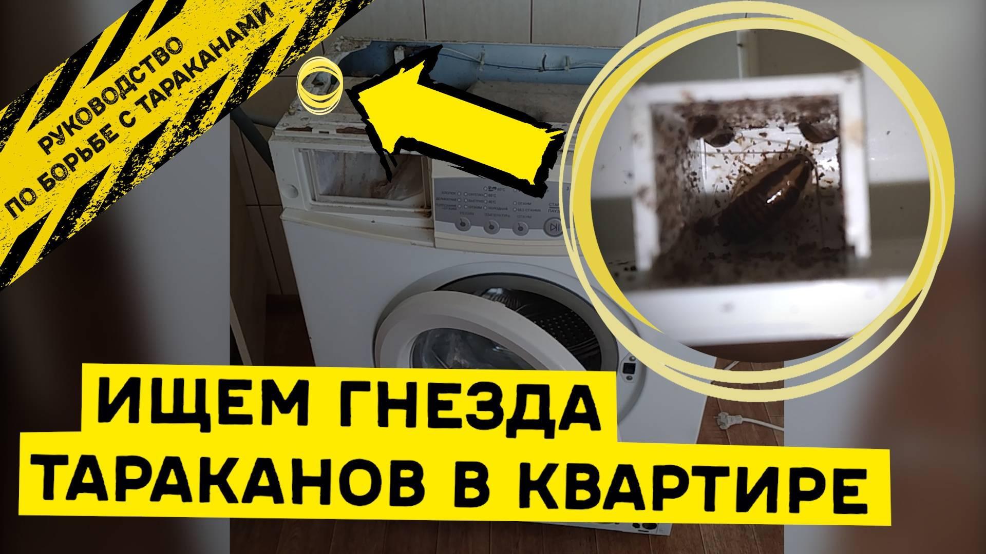 Куда ушли тараканы: почему исчезли, куда делись из квартир: описание, видео, фото