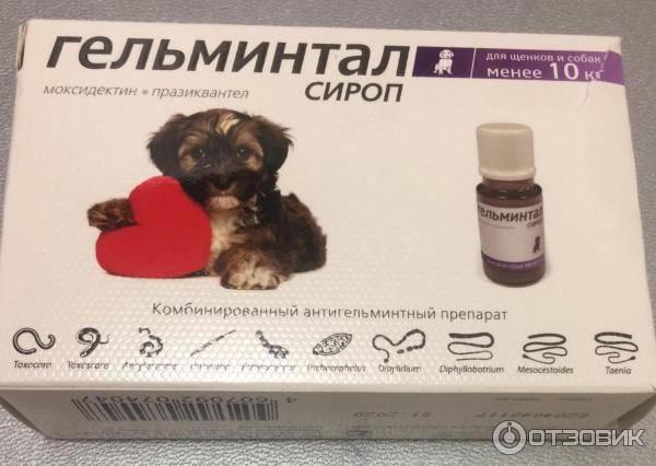 Гельминтал (капли) для кошек и собак   отзывы о применении препаратов для животных от ветеринаров и заводчиков