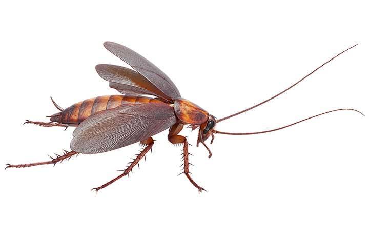 Какие насекомые могут обитать в квартире кроме тараканов?