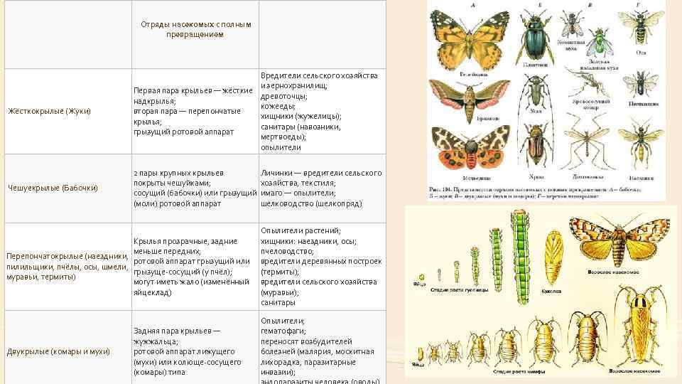 Разнообразие и красота различных видов бабочек