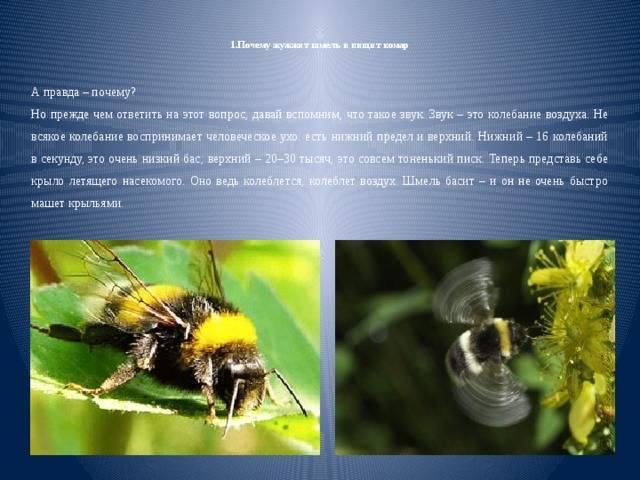 Высокочастотный шум из ноутбука (подобный писку комара). на что обратить внимание и как снизить уровень шума