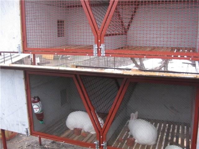 Как защитить кроликов от комаров