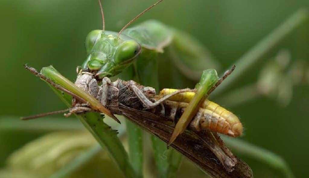 Чем питаются стрекозы в природе
