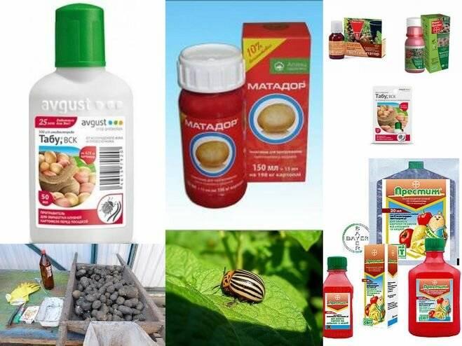 Деготь березовый: применение в саду и огороде для защиты растений