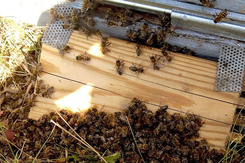 Последствия исчезновения пчел на земле