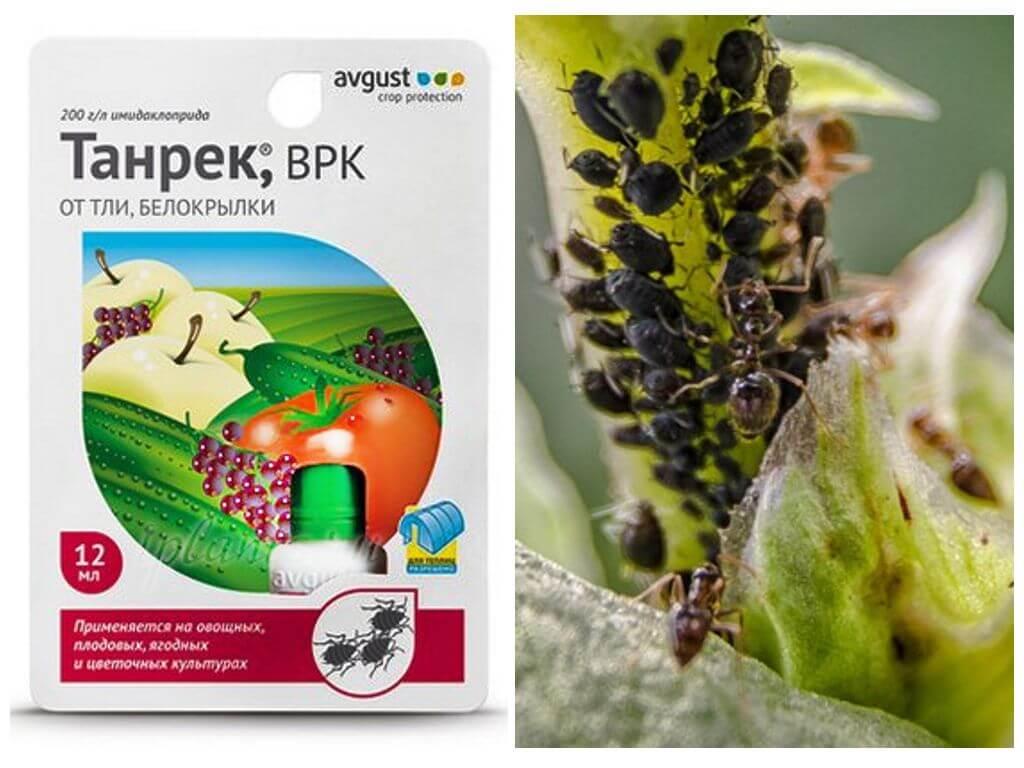 Танрек, врк (инсектициды и акарициды, пестициды) — agroxxi