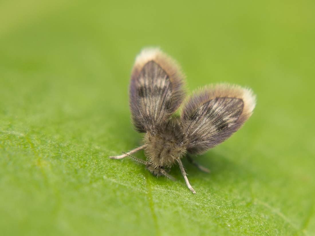 Гусеницы – что едят, строение, образ жизни