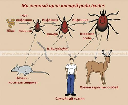 ❶ паутинный клещ – как выглядит, виды, признаки, как от него избавиться раз и навсегда