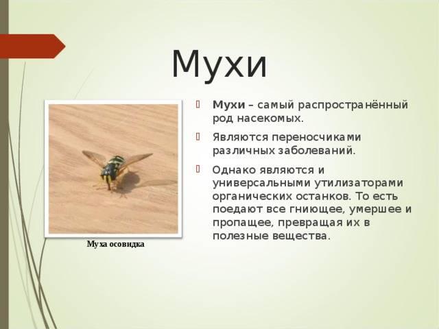 Размножение мух