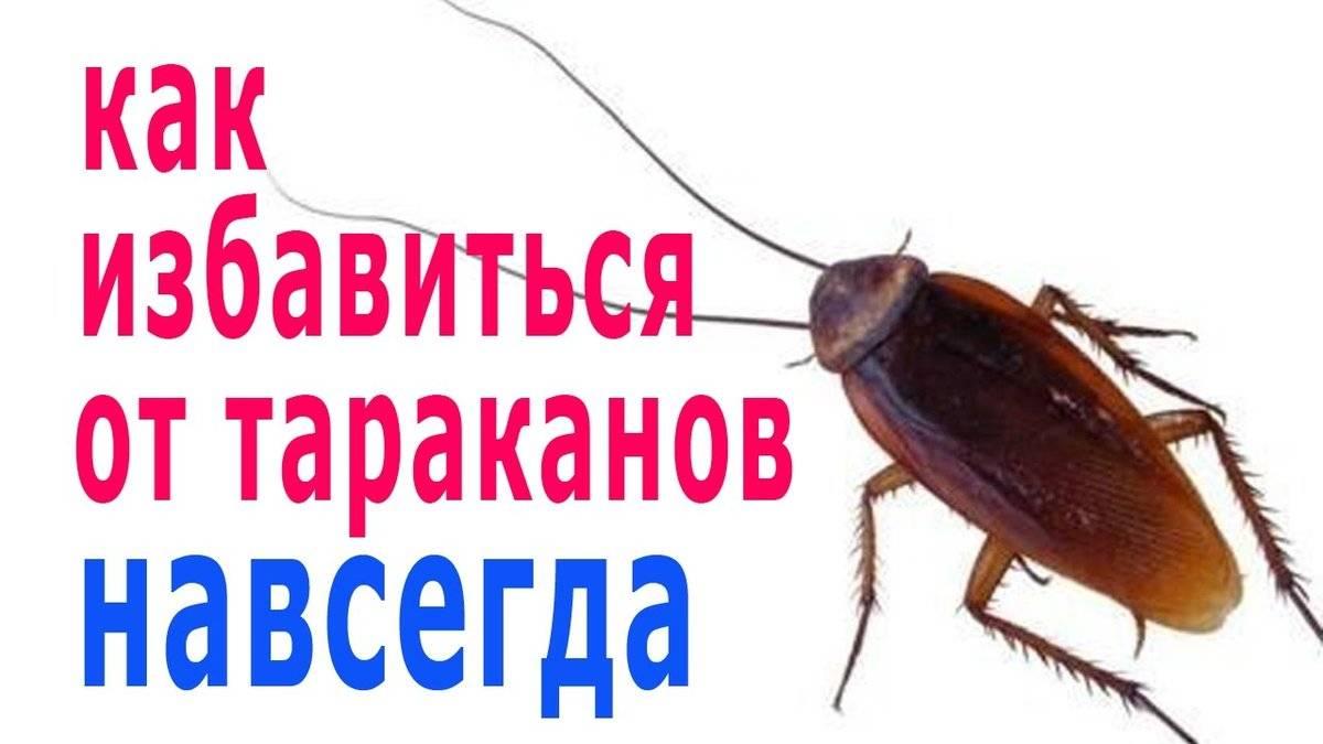 Легкие и эффективные способы избавления от тараканов
