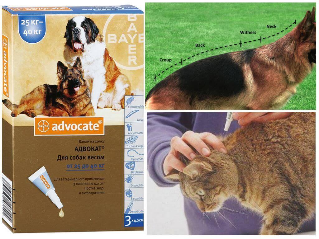 Адвокат капли для собак: инструкция по применению, отзывы, аналоги