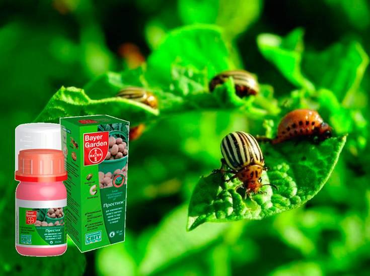 Табу от колорадского жука – характеристика и правила использования