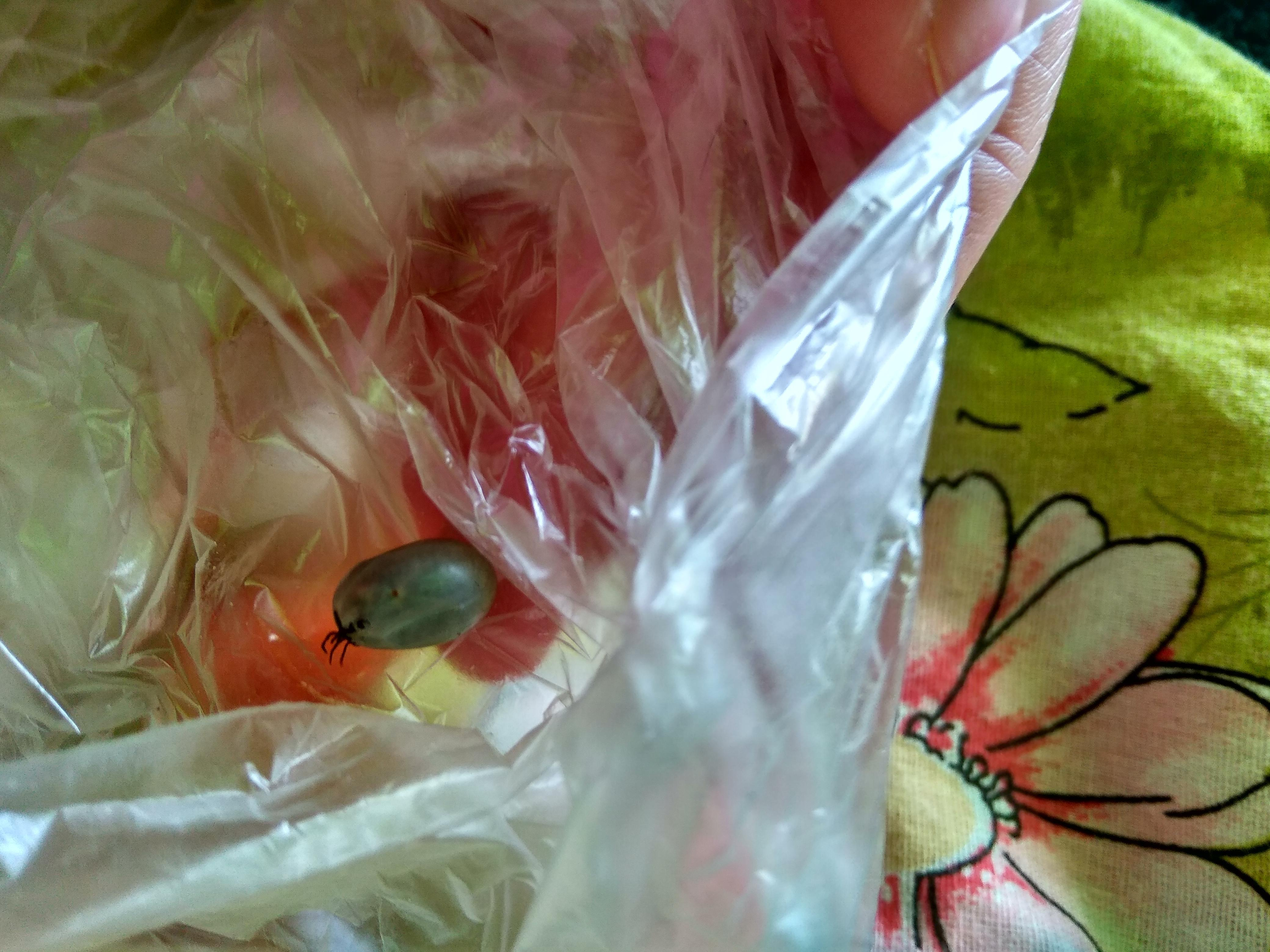 Что делать если проглотил личинок мухи. опасные мухи