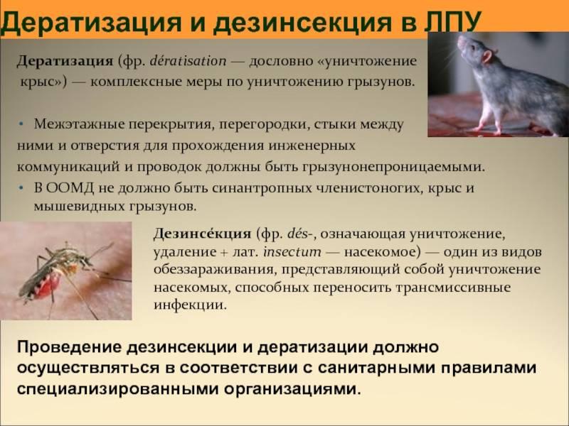 Дезинфекция дезинсекция и дератизация