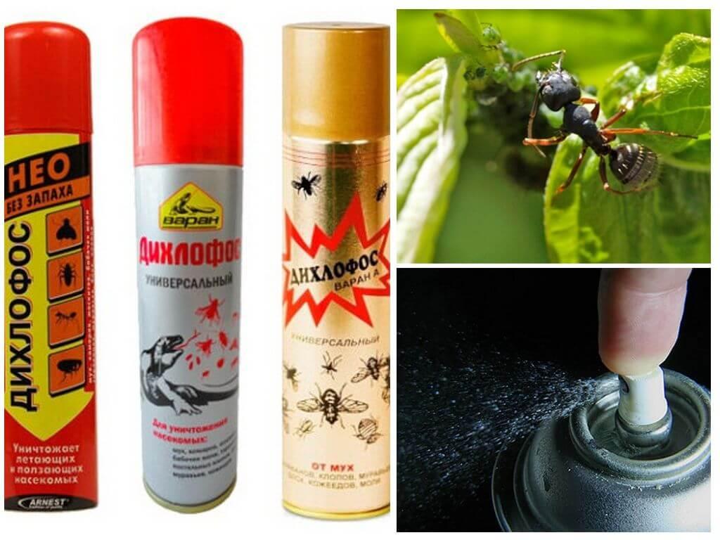Помогает ли дихлофос избавиться от тараканов