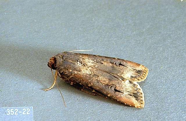 Луковая, или порейная муха: способы борьбы с ней — насекомые вредители