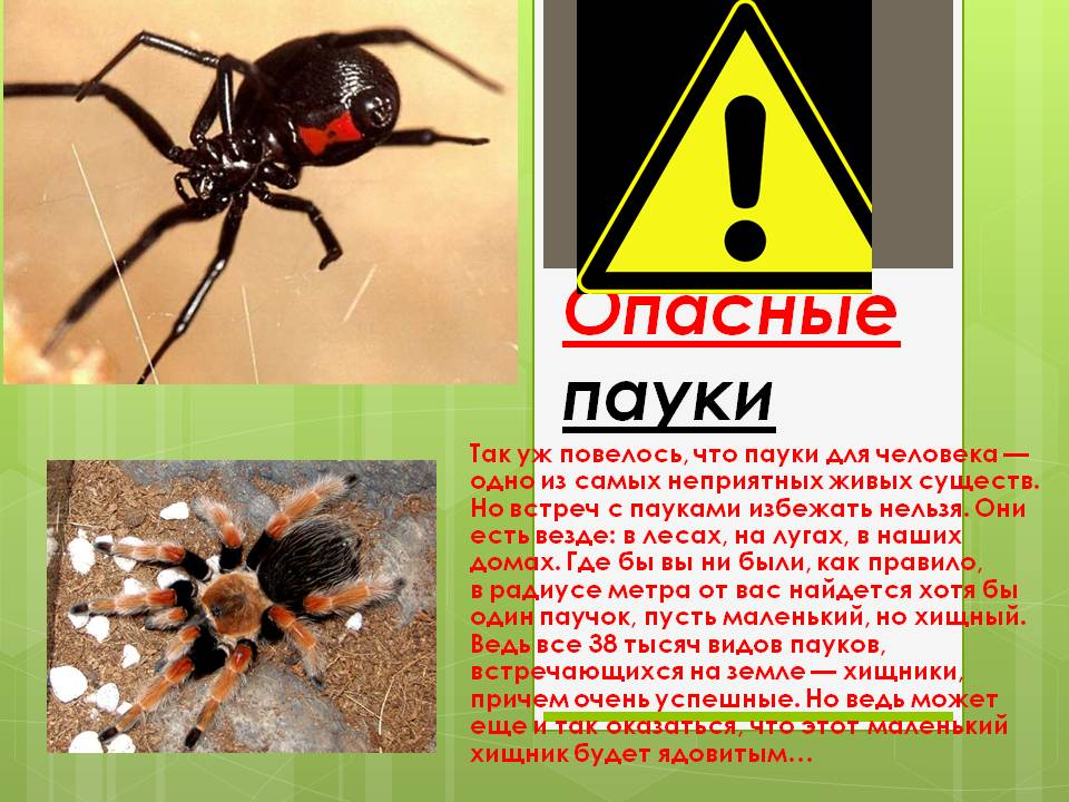 Ядовитые существа, которые обитают только на территории россии