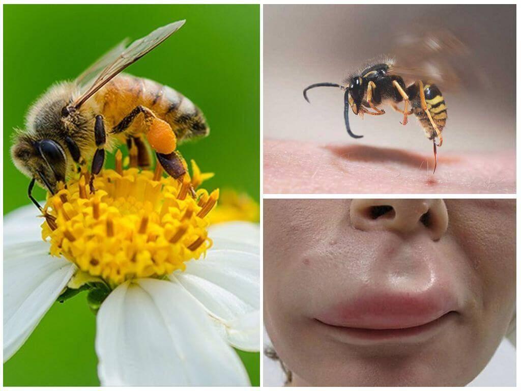 Песочные осы: жизненный цикл, питание и вред от насекомых для человека