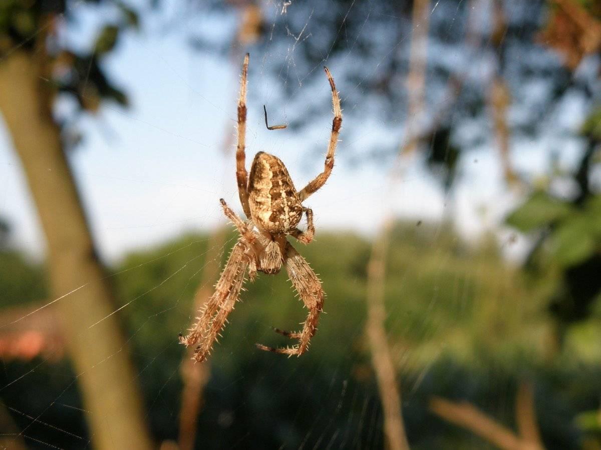 Ядовитые пауки россии: их фото и названия с описанием
