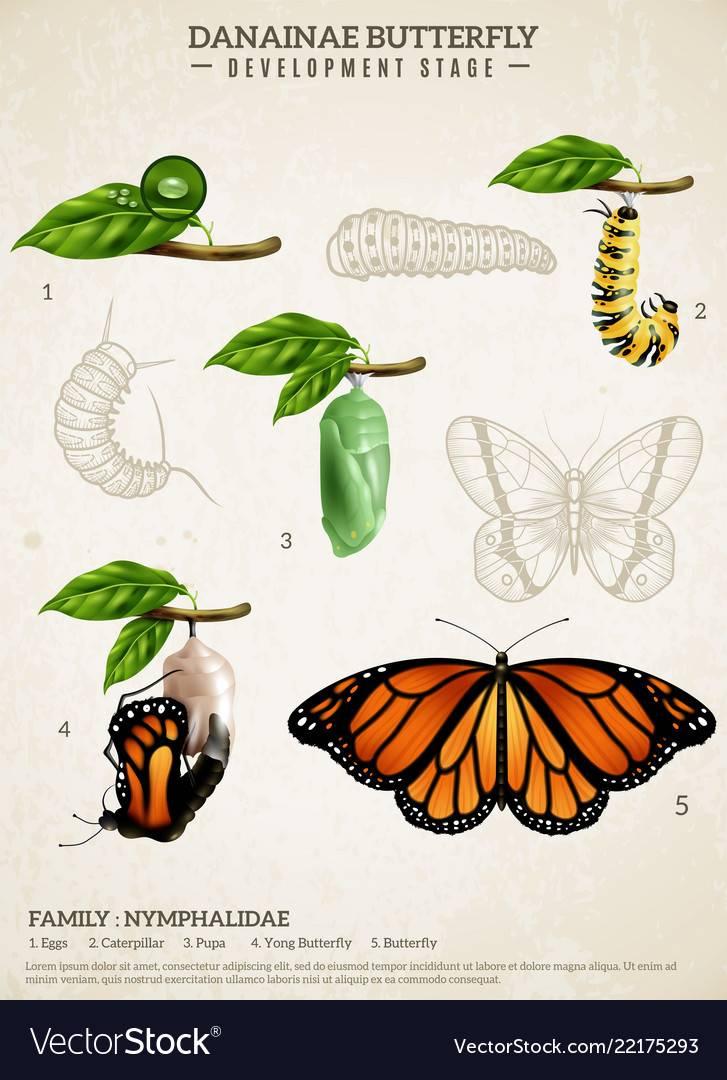Из гусеницы в бабочку (о раскрытии души) | обретение силы любви