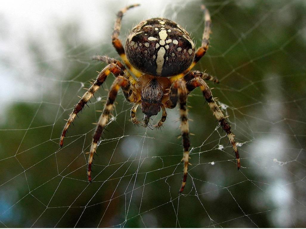 Самые опасные пауки в россии – список, описание, где водятся, чем опасны, фото и видео  - «как и почему»