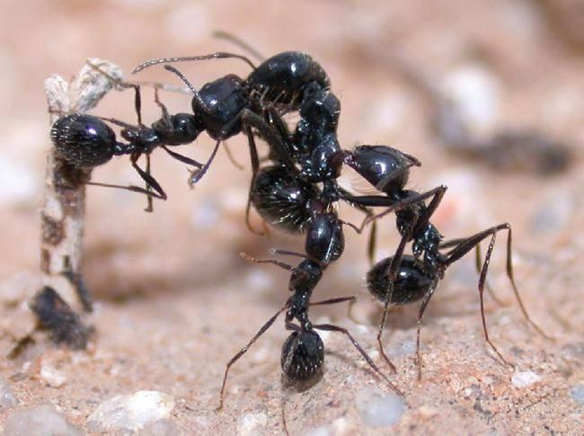 Топ-9 самых эффективных способов борьбы с муравьями на садовом участке (фото & видео) +отзывы