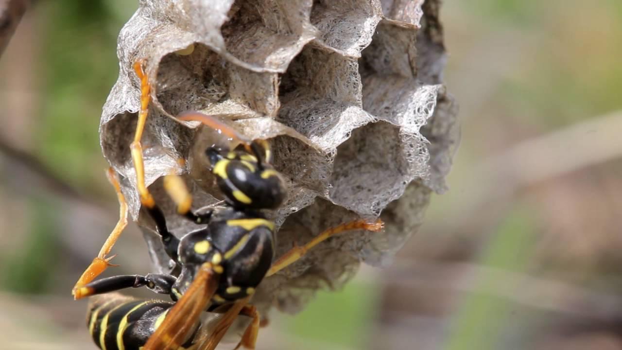 Как осы видят окружающий мир: зрение насекомых в темноте и светлое время суток