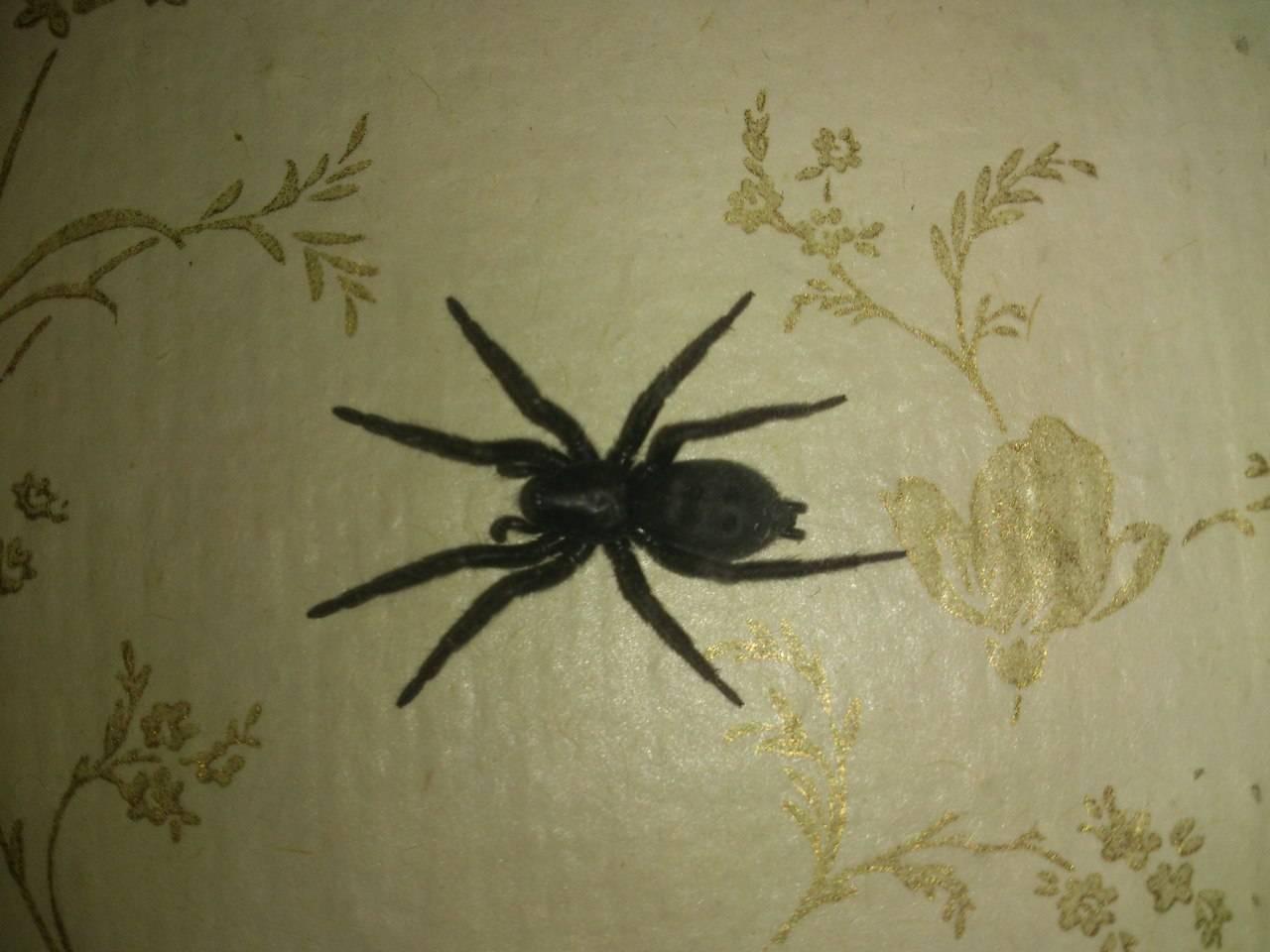 Как избавиться от пауков: в частном доме и квартире, народными и химическими средствами