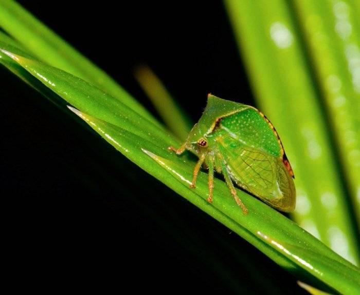 Самые необычные насекомые в мире