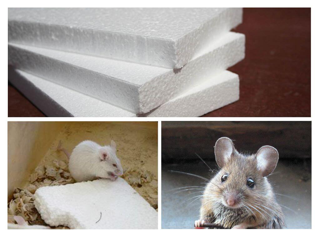 Какой утеплитель не грызут и не любят мыши и крысы: обзор материалов, преимущества и недостатки