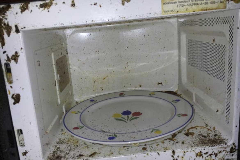 Как вывести тараканов из микроволновки, что делать чтобы выгнать их быстро?