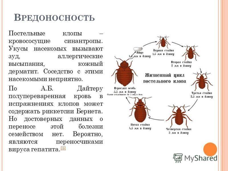 Чем опасны клопы: какие болезни переносят, какую реакцию могут вызвать? русский фермер