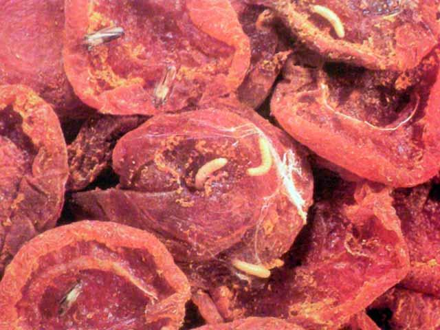 Как избавится от фруктовой моли. как распознать и избавиться от моли в сухофруктах