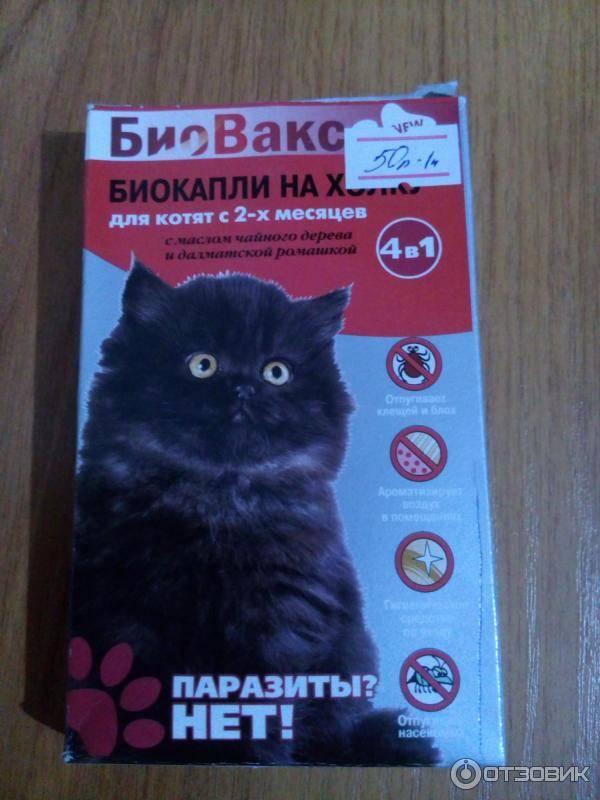 Шампуни от блох для кошек: выбираем и используем правильно. шампунь от блох для кошек и котят: какой лучше